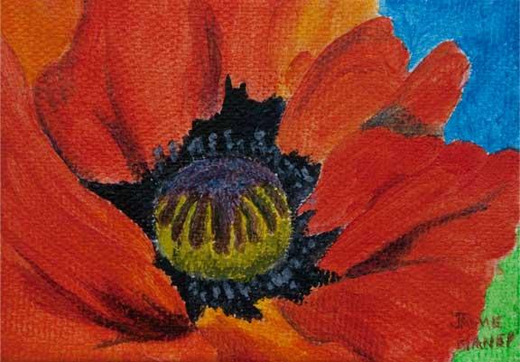 Red Oriental Poppy flower closeup