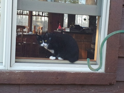 Mocee the cat in kitchen window