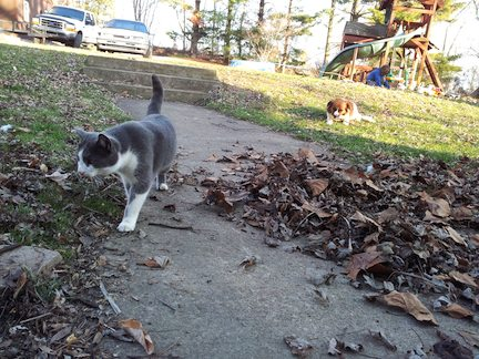Thunder the cat and Zoey the dog chewing on a stick