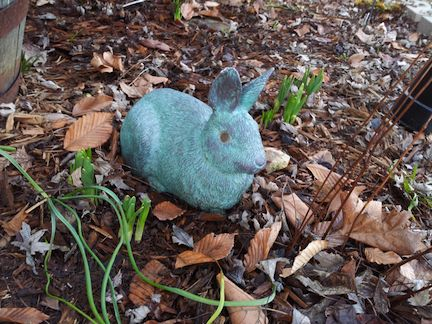 outside bunny with flower shoots peeking up