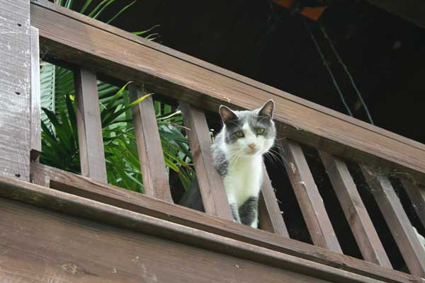 Thunder-Cat-looking-down-from-deck