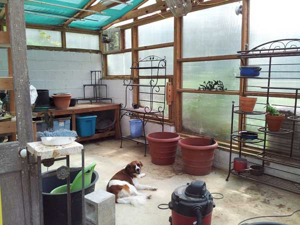 My empty greenhouse waiting for the return of green inhabitants