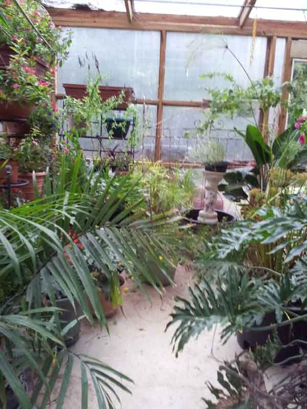 my own personal jungle