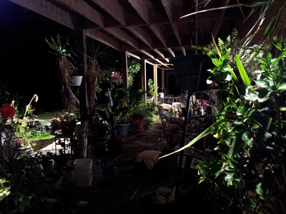 midnight gardening in Studio Gardens