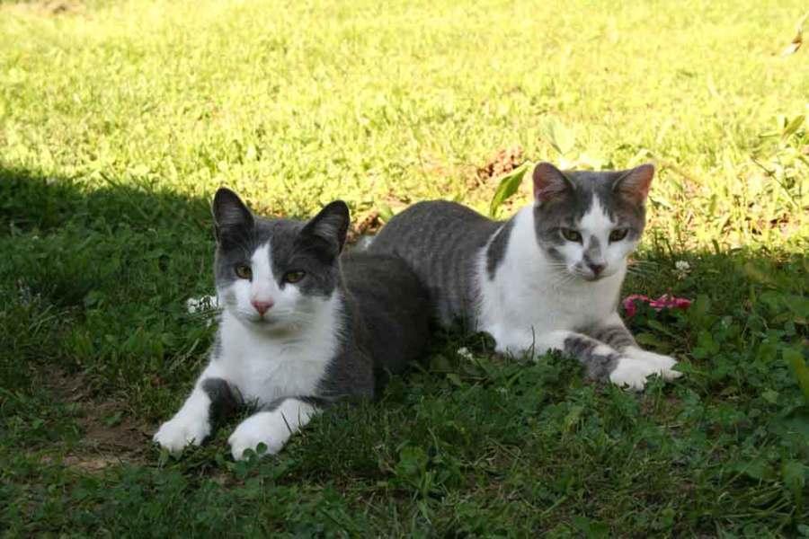 Twins-T+L-10-mos_1531
