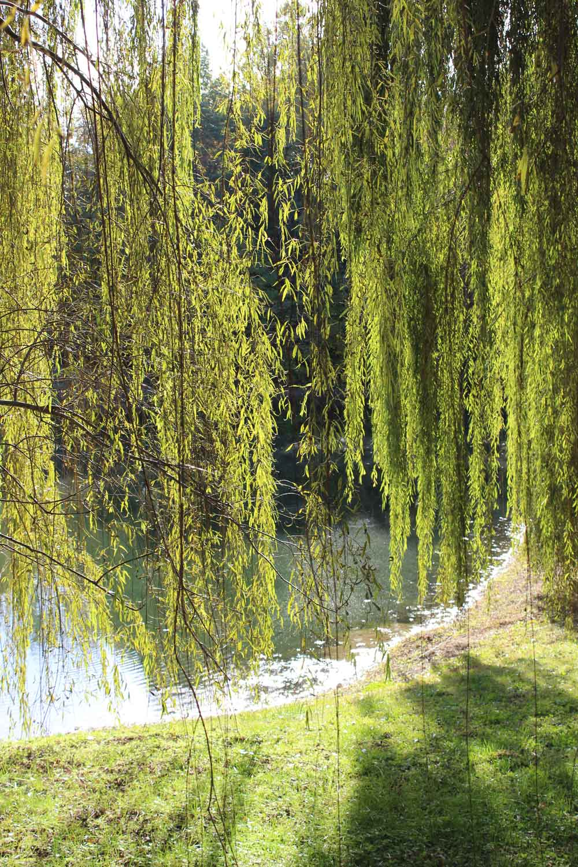 Make A Natural Garden Arbor