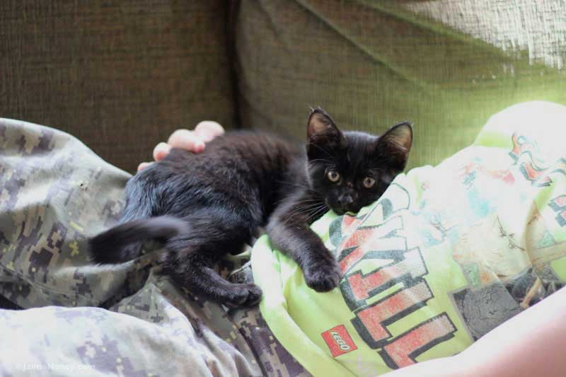 Black kitten laying down in boy's arms