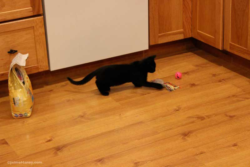 black kitten playing with toy mouse
