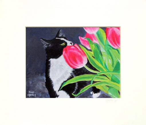 White matted print of a black and white Tuxedo cat smelling pink tulips painting