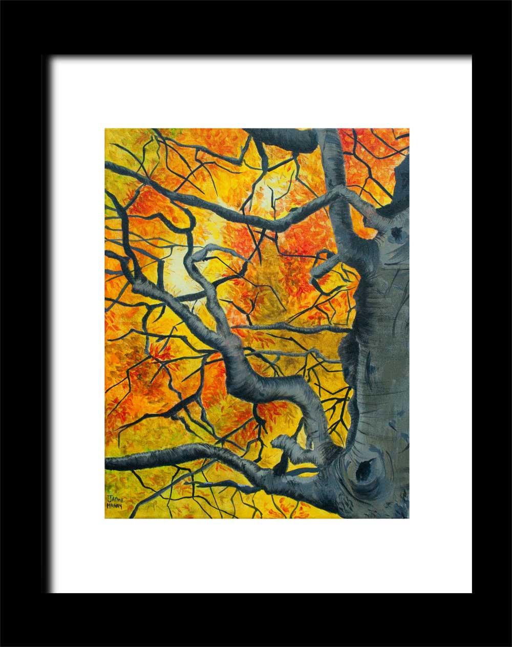 Tangled - Gnarly gray bark and vibrant autumn leaves tree ...