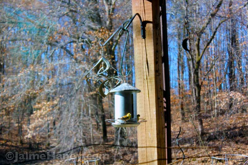 birds at feeder in winter