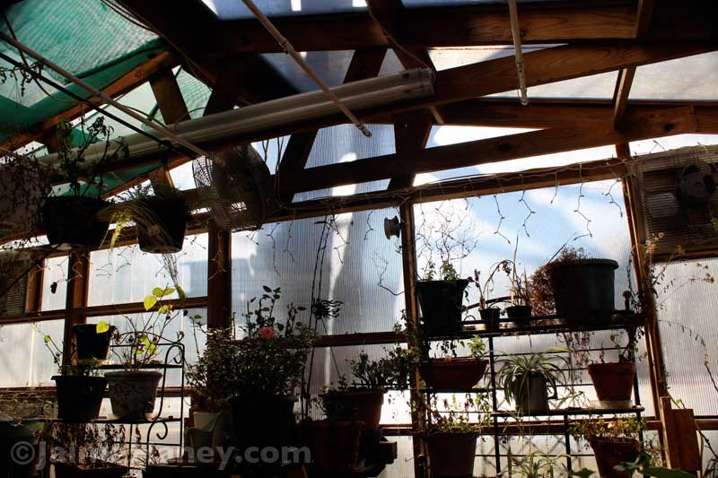 south-wall-in-winter-greenhouse