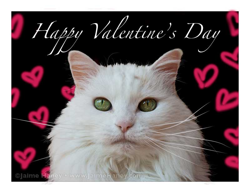 Valentine White cat