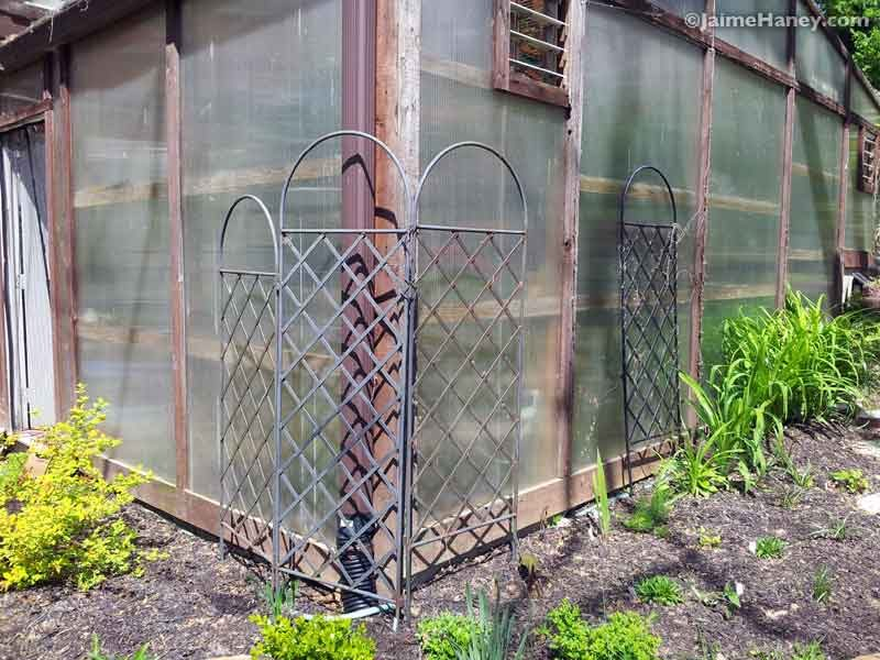 Southwest corner of greenhouse 2015