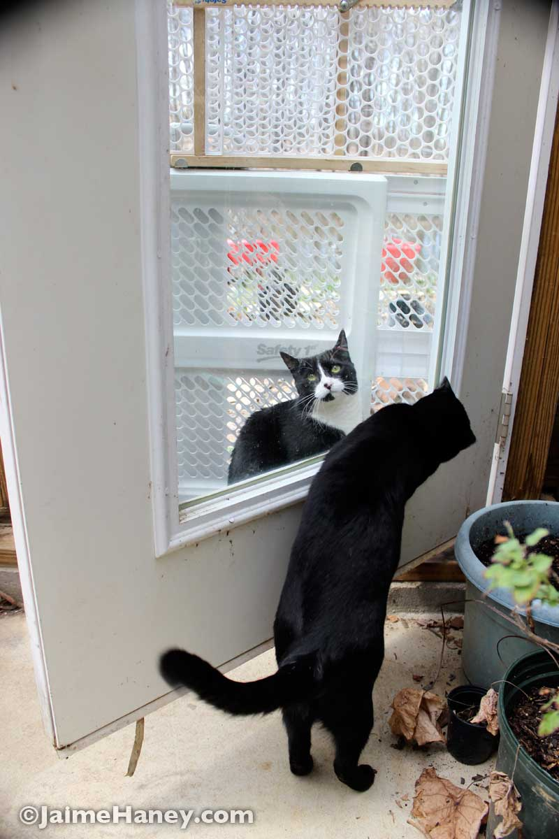 two cats at greenhouse door