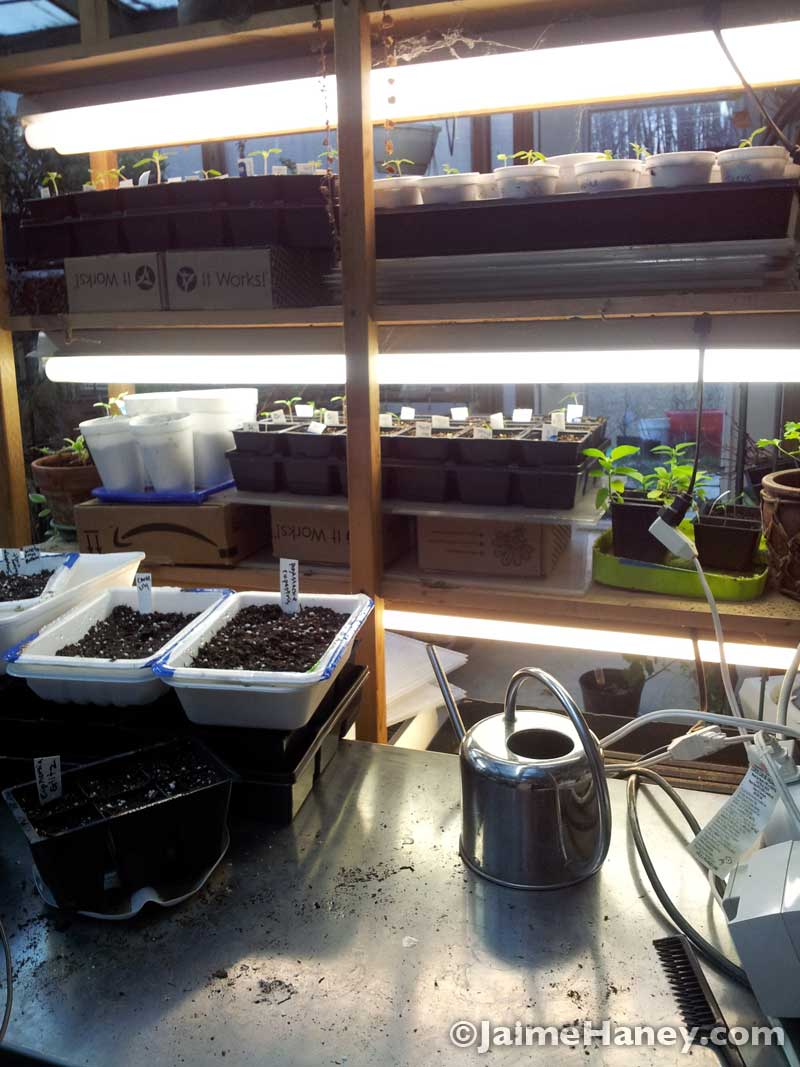 My work table in my greenhouse