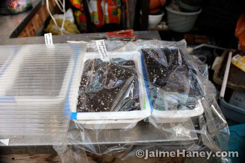 meat trays used as seed starting trays