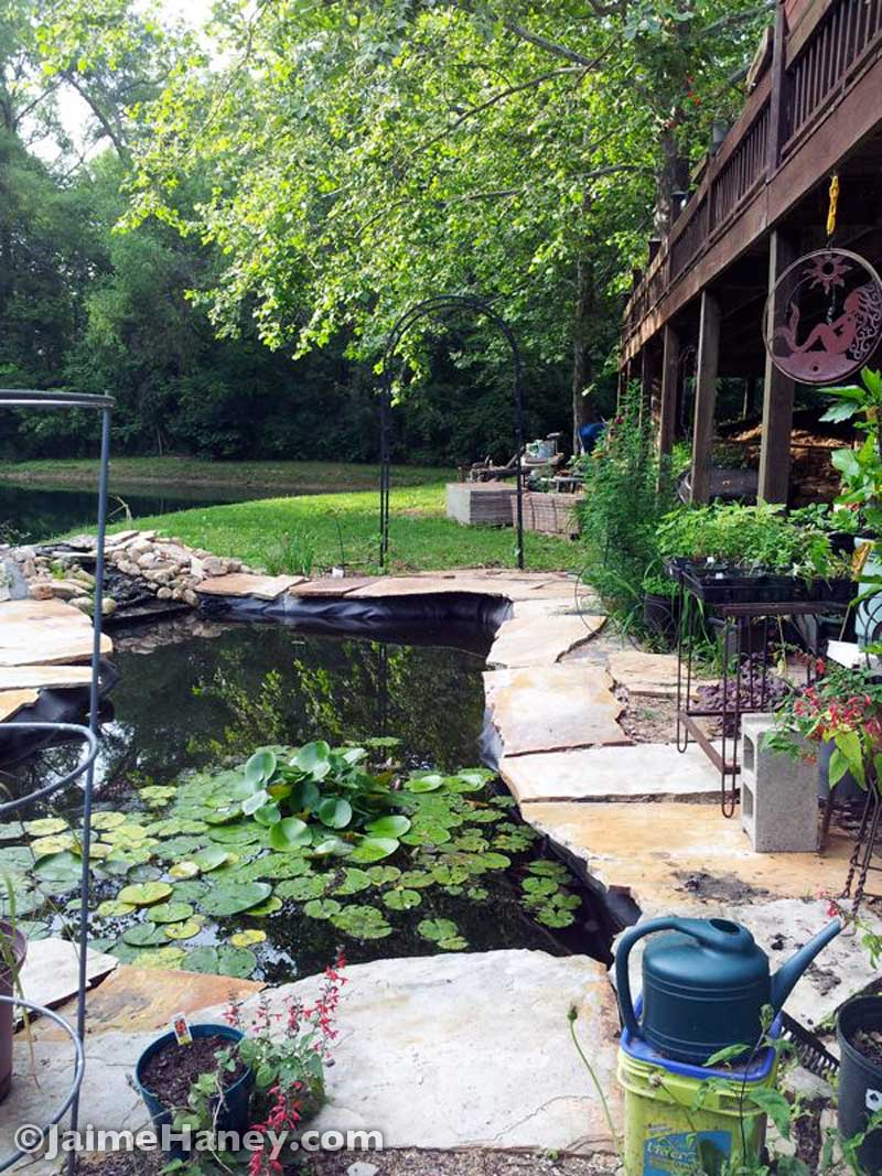 Studio-Gardens-koi-pond-looking-north