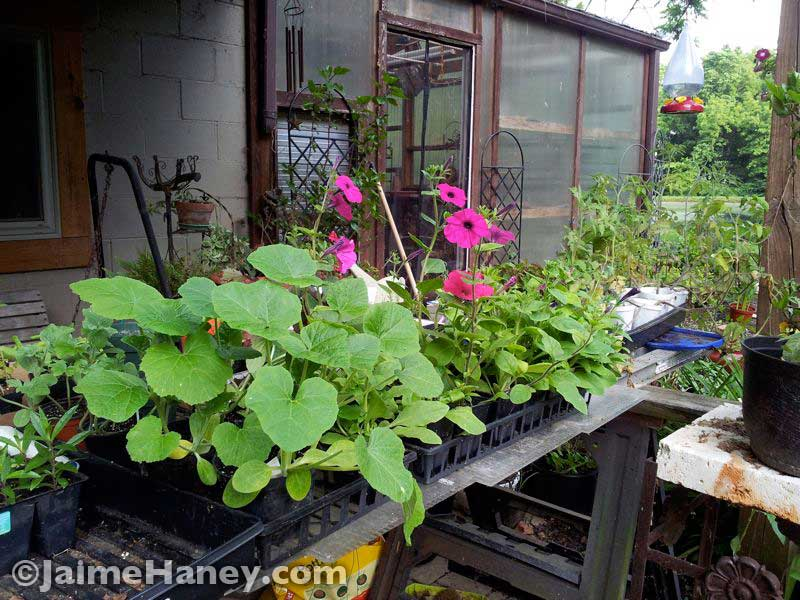 under-deck-flowers-started-from-seeds