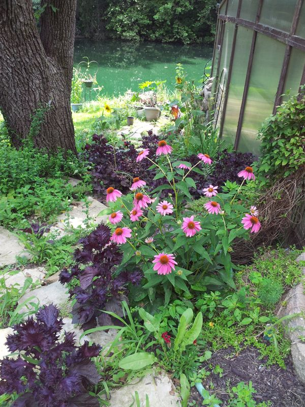 Rustic stone steps with coneflowers leading to Studio Gardens