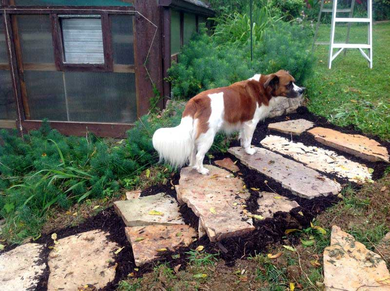 Zoey, my dog using the new rustic stone steps