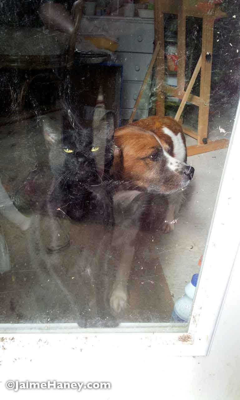 JuJu and Zoey at the greenhouse door