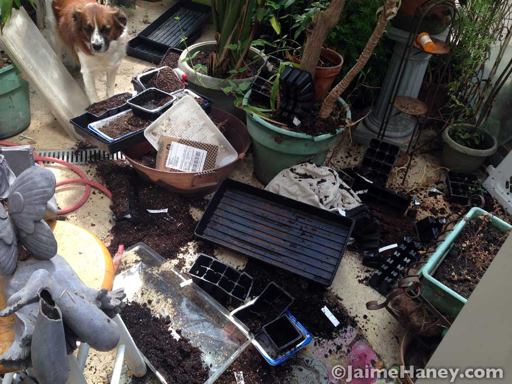 Greenhouse disaster