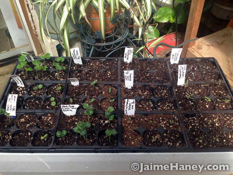 flat of various thriving seedlings before the greenhouse disaster