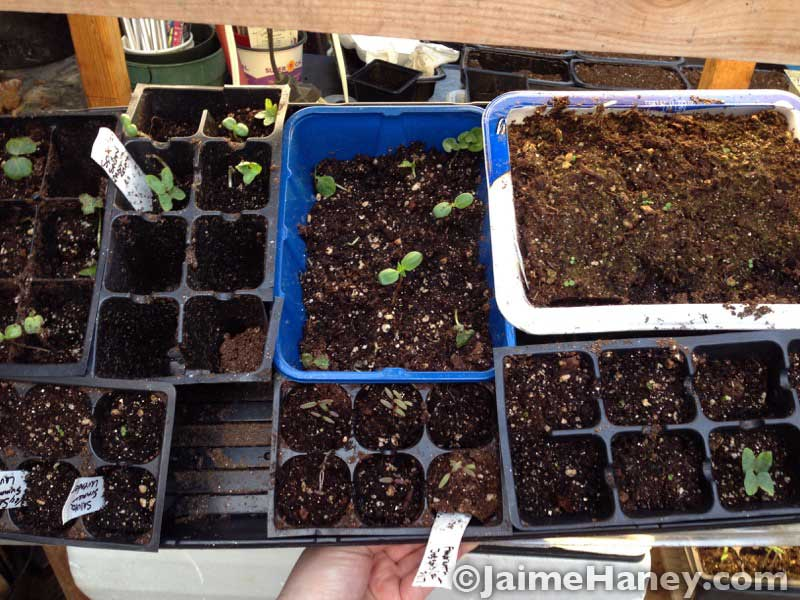 what was left of the seedlings, trying to recover