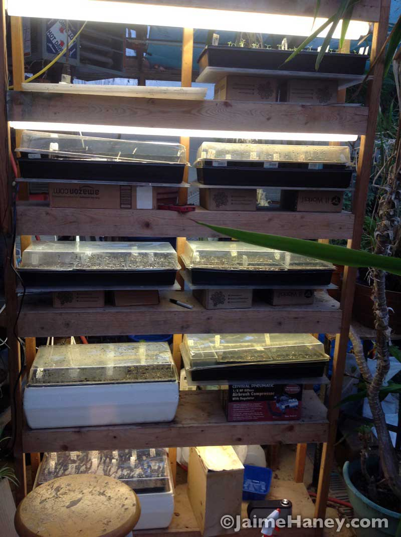 Seed condo before the greenhouse disaster