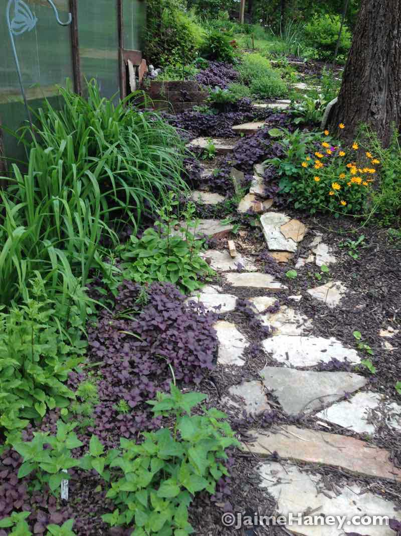 rustic steps along greenhouse