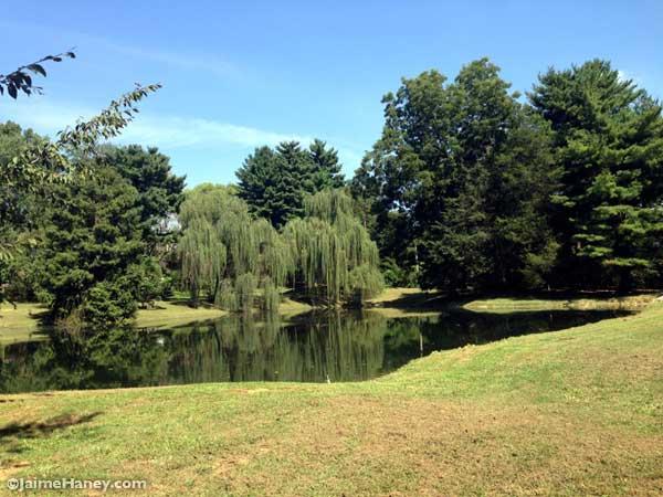 lake and tree view