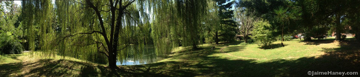 panoramic-view-of-lake-and-weeping-willow-trees_3454
