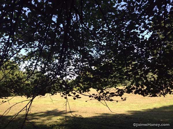 under tree canopy