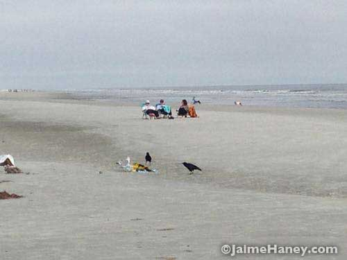 Two crows and a sea gull curious about a kite on the beach.