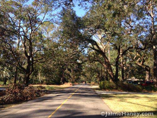 Happily bicycling the roads lined with Live Oak Trees.