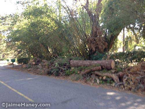 Hurricane Matthew debris alongside of road in Sea Pines