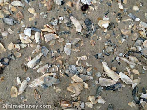 shells that have washed up on the shore