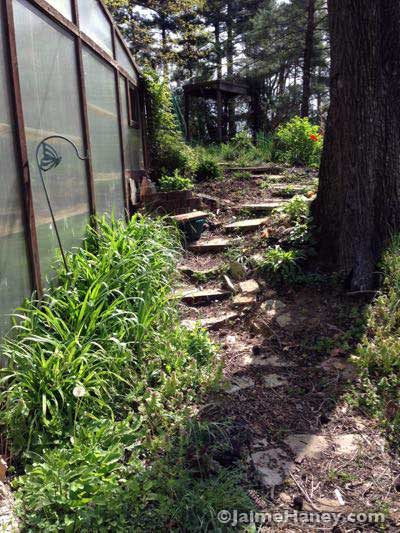 looking up the rustic stone steps I installed a few summers ago.