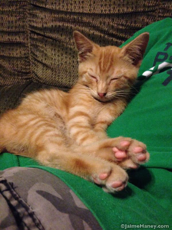 orange tabby kitten