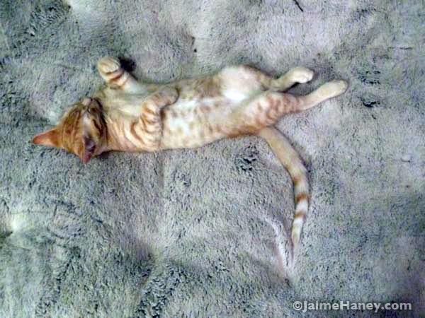 orange tabby kitten sleeping in giant dog bed