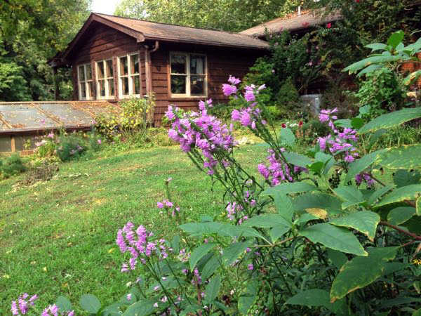 Our cedar home with Obedient flowers in foreground