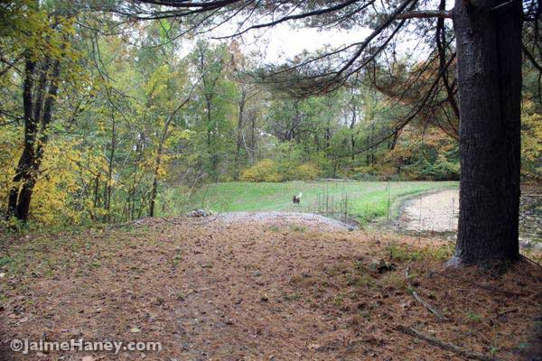 fall nature walk