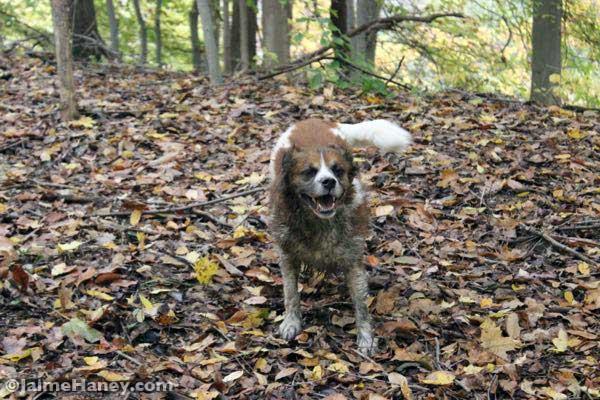 muddy dog in woods