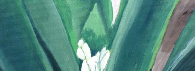 Day 8 – Clivia Plant