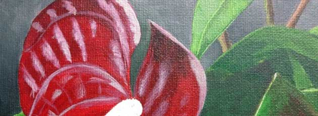 Day 28 Red Anthurium Flowers