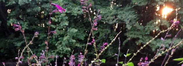 Studio Gardens and Meditation